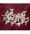 Tooth of shark fossil - 1 cm - desert of the Sahara - NOVELTY