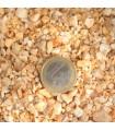 Incienso Benjui en Grano 25 gr