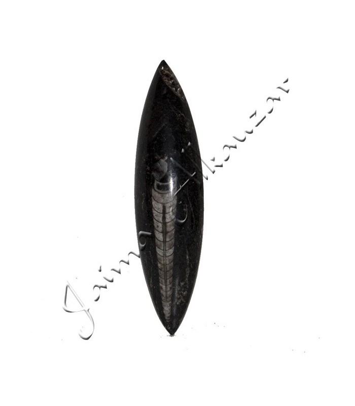 Ortosera Pulida - 14 x 4 cm - Desierto Sahara